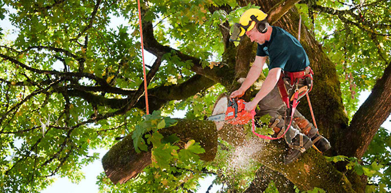commercial tree service in Glendale, CA
