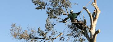 tree care service in Glendale, CA