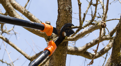 tree pruning in Glendale, CA